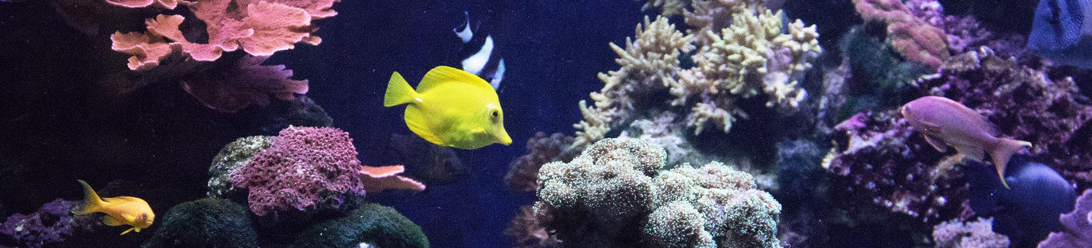 Tulsa Aquarium